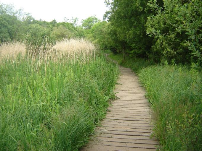 Ab und zu gibt es Bohlenwege über versumpfte Stellen (Foto: Hikekarin.com)