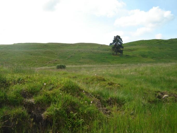 Weite Wiesen mit Wollgras findet man überall (Foto: Hikekarin.com)