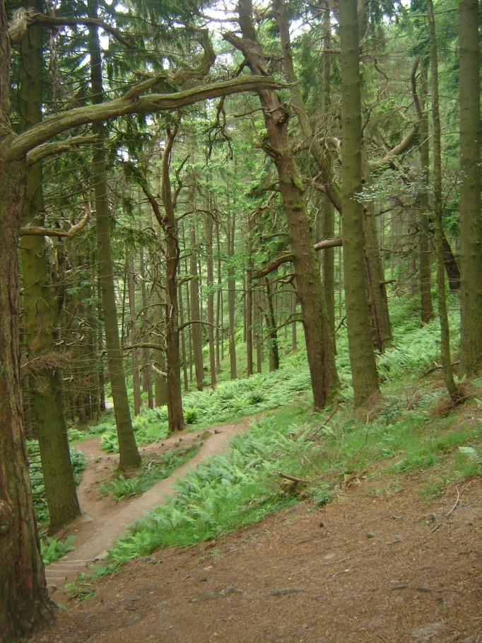 Uriger Wald im Nationalpark Loch Lommond (Foto: Hikekarin.com)