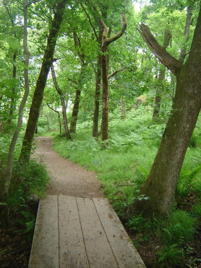 Stege überbrücken kleine Bäche im Märchenwald (Foto: Hikekarin.com)