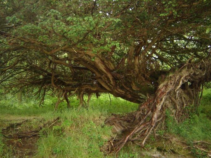 """ Waldgeister"" im Nationalpark am Loch Lommond (Foto: Hikekarin.com)"