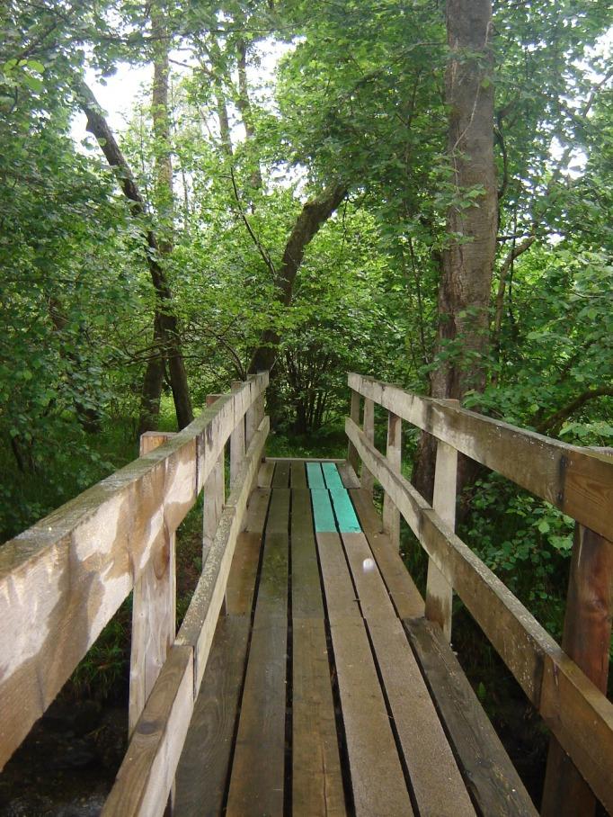 Fast ein wenig wie im Urwald (Foto: Hikekarin.com)