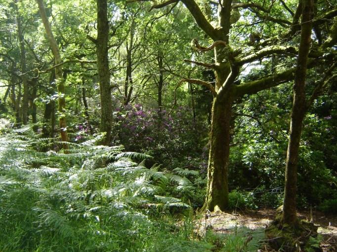 Was für ein schöner Wald! (Foto: Hikekarin.com)