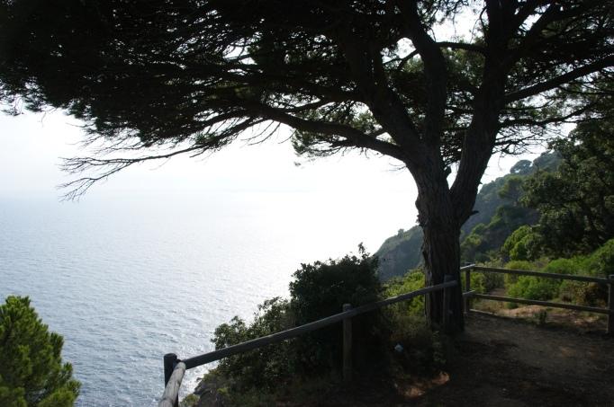 Schattiger Ausssichtspunkt an der Steilküste (Foto: Hikekarin.com)