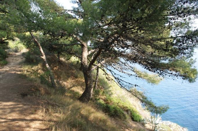Von Pinien gesäumter Pfad an der Steilküste (Foto: Hikekarin.com)