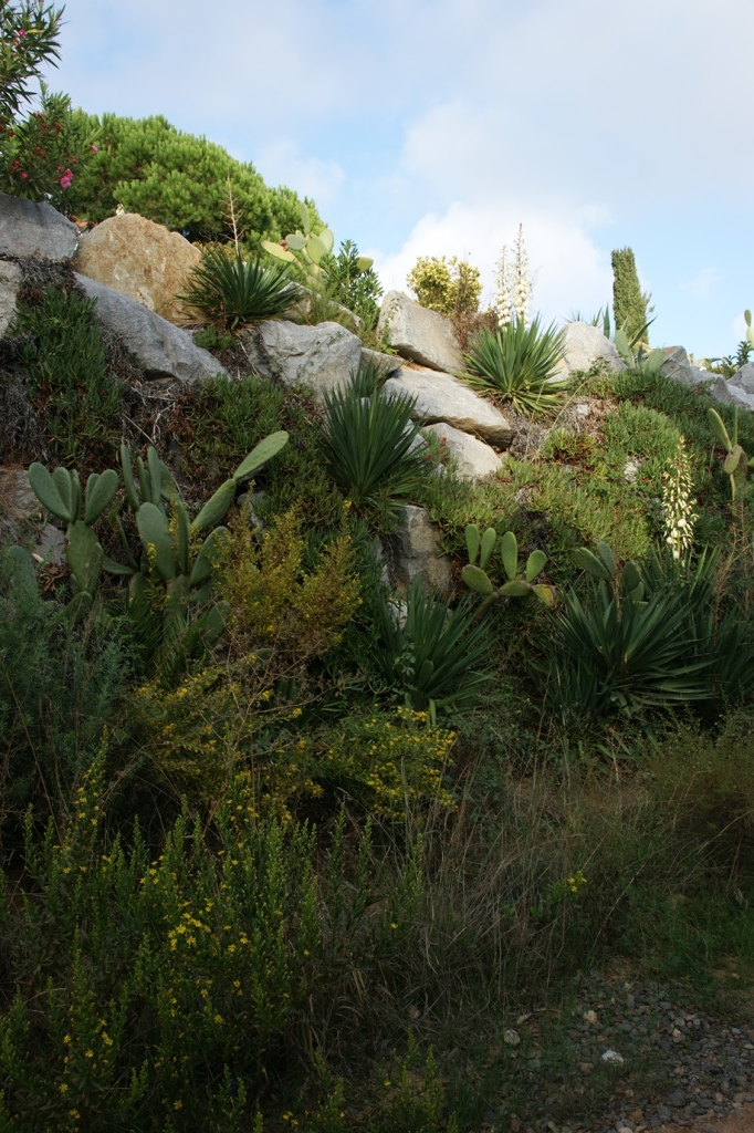 Typische mediterrane Vegetation an den Küstenhängen (Foto: Hikekarin.com)