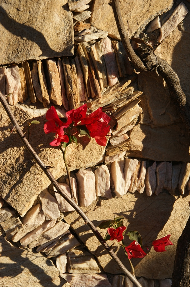 Bougainvillea - die hübsche Zierblüte des Strauchs /Foto: Hikekarin.com)