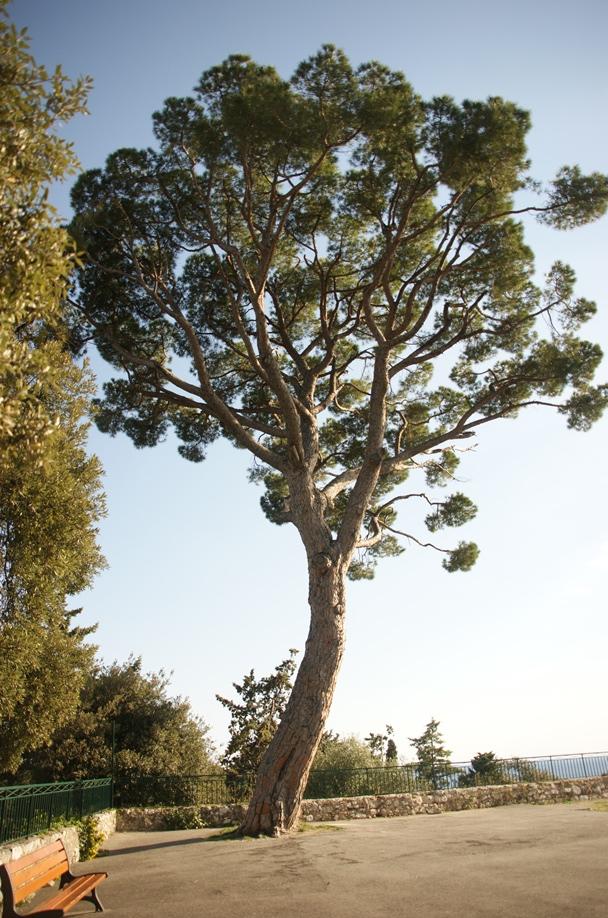 Tolle Pinien stehen hier oben (Foto: Hikekarin.com)