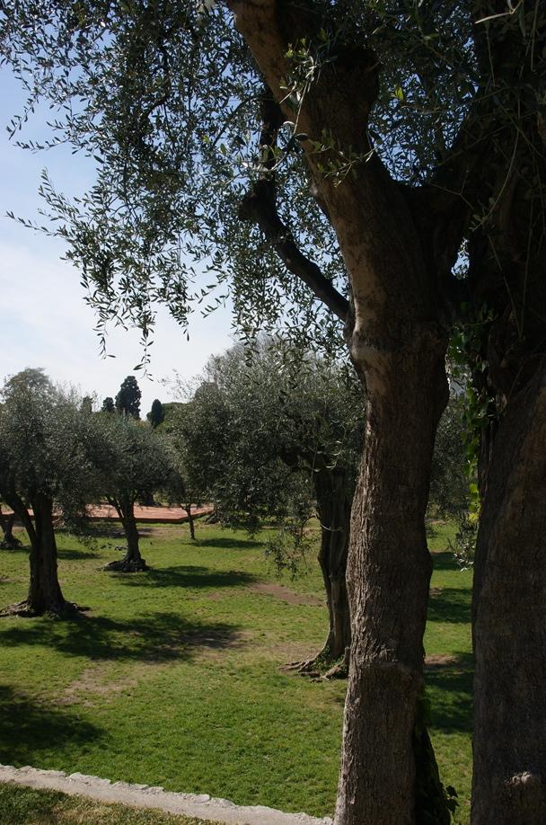 Olivenhaine im Klostergarten - Cimiez (Goto: Hikekarin.com)