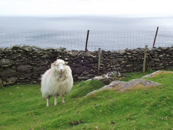 I love the Irish sheeps (Foto: Hikekarin.com)