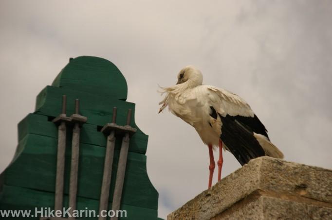Ein Faro-Storch im Wind